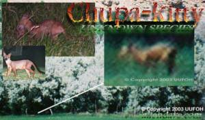 Chuppa-kitty - Photo comparisons
